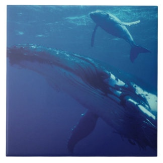 South Pacific, Tonga. humpback whale and calf Ceramic Tile