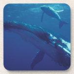 South Pacific, Tonga. humpback whale and calf Coasters