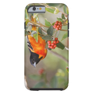 South Padre Island, Texas, USA, Baltimore Oriole Tough iPhone 6 Case