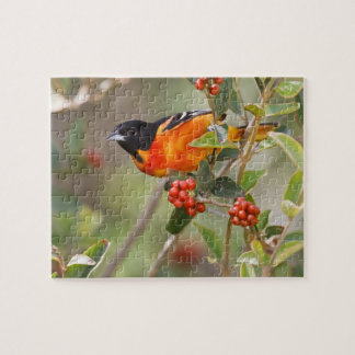 South Padre Island, Texas, USA, Baltimore Oriole Jigsaw Puzzle