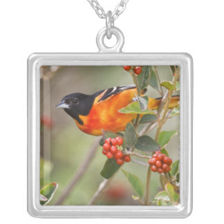 South Padre Island, Texas, USA, Baltimore Oriole Silver Plated Necklace
