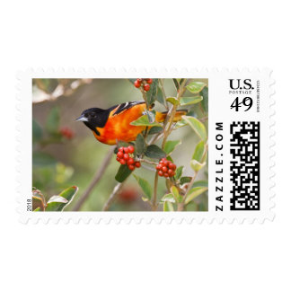 South Padre Island, Texas, USA, Baltimore Oriole Stamp