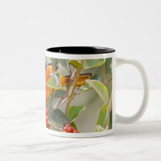 South Padre Island, Texas, USA, Baltimore Oriole Two-Tone Coffee Mug