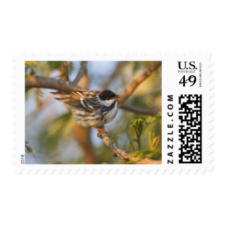 South Padre Island, Texas, USA, Blackpoll Stamp