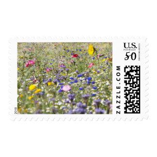 South Petherton, Somerset, UK Postage