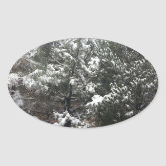 South Rim Grand Canyon National Park Pines Oval Sticker