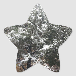 South Rim Grand Canyon National Park Pines Star Sticker