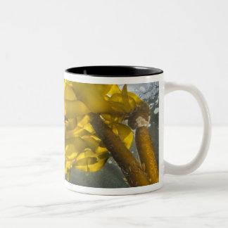 South side of Ewing Island, San Juan Islands, Two-Tone Coffee Mug