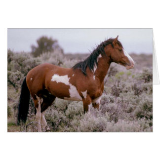 South Steens Wild Horse Greeting Card