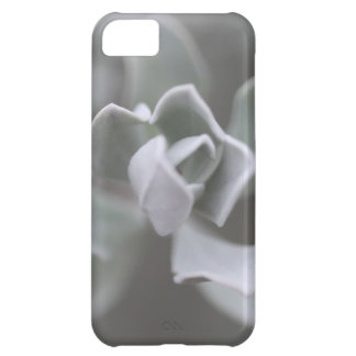 """South Texas Rose """"Sage"""" Photograph iPhone 5C Cover"""