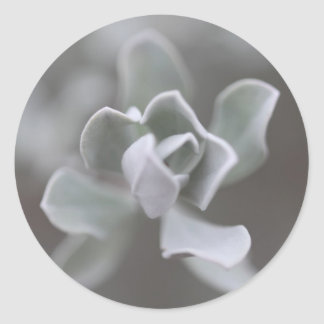 """South Texas Rose """"Sage"""" Photograph Classic Round Sticker"""