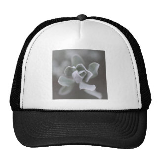 """South Texas Rose """"Sage"""" Photograph Trucker Hat"""