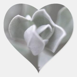 "South Texas Rose ""Sage"" Photograph Heart Sticker"