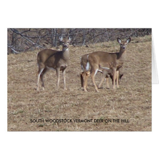 SOUTH WOODSTOCK VERMONT DEER GREETING CARDS