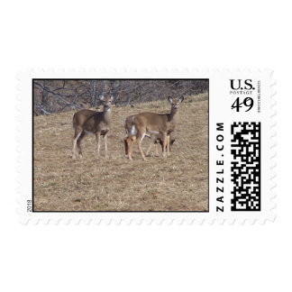 SOUTH WOODSTOCK VERMONT HILL DEER POSTAGE