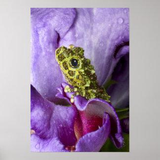 Southeast Vietnam. Close-up of mossy tree frog Print