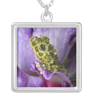 Southeast Vietnam. Close-up of mossy tree frog Silver Plated Necklace