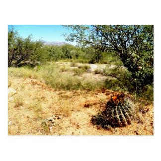 Southern Arizona Desert Views Postcard