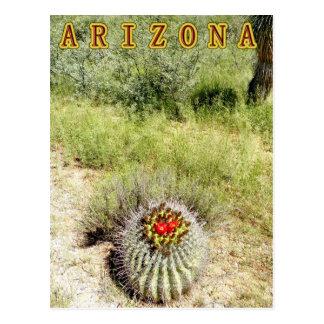 southern Arizona on the way to NM; barrel cactus Postcard