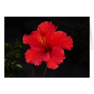 Southern California Red Hibiscus Flower card