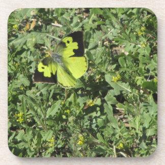 Southern Dogface Butterfly Coaster