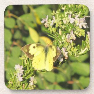 Southern Dogface Butterfly Coasters