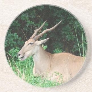 Southern Eland Habitat  Coasters