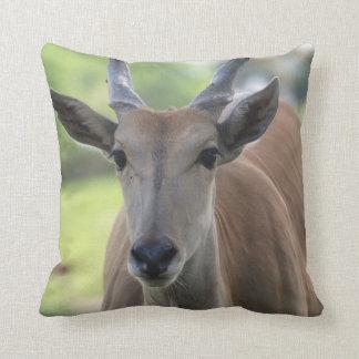 Southern Eland  Pillow