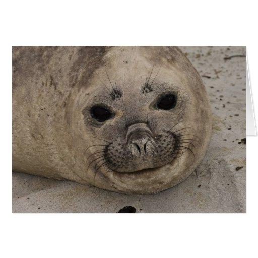 Southern Elephant Seal Mirounga leonina) 3 Card