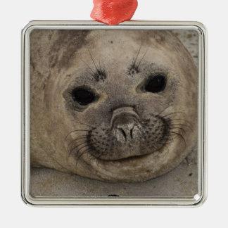 Southern Elephant Seal Mirounga leonina) 3 Metal Ornament