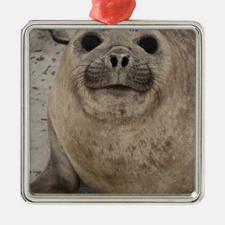 Southern Elephant Seal Mirounga leonina) Metal Ornament