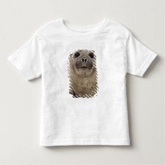 Southern Elephant Seal Mirounga leonina) Toddler T-shirt