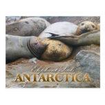 Southern Elephant Seals, Antarctic Peninsula Postcard