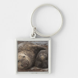 Southern Elephant Seals Mirounga leonina) Keychain