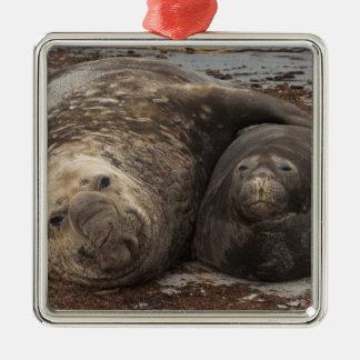 Southern Elephant Seals Mirounga leonina) Metal Ornament