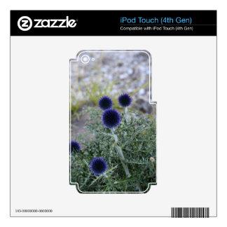 Southern globe thistle (Cardo pallotta) iPod Touch 4G Decal