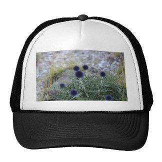 Southern globe thistle (Cardo pallotta) Trucker Hat
