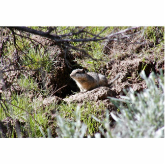 Southern Idaho Ground Squirrel Photo Cut Out