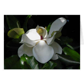 Southern Magnolia Card