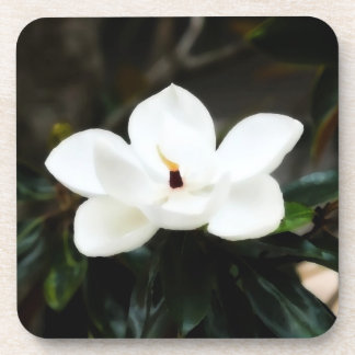 Southern Magnolia Flower Coffee Drink Coasters