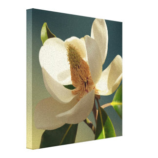 Southern Magnolia flower, romantic Gallery Wrapped Canvas