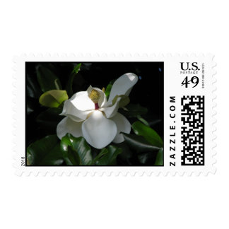 Southern Magnolia Postage