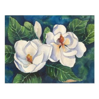 Southern Magnolias Postcard