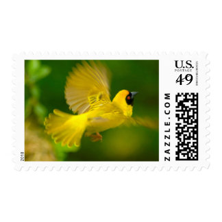 Southern Masked Weaver (Ploceus Velatus) Postage Stamp