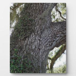 Southern Oak 2 Plaque