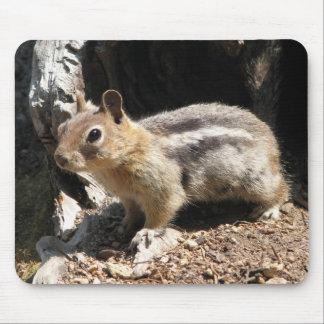 Southern Oregon Chipmunk Mouse Pad