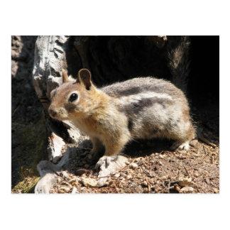 Southern Oregon Chipmunk Postcard