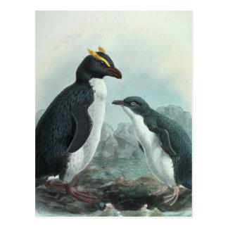 Southern Rockhopper Penguin Postcard