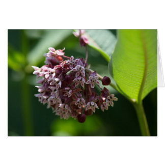 Southern Wormwood (Artemisia abrotanum) Card