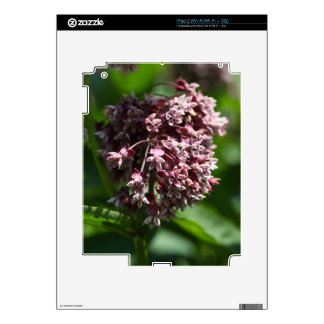 Southern Wormwood (Artemisia abrotanum) Decals For The iPad 2